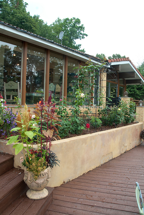 Raised bed rose garden, planters of flowers, on backyard decking, upscale house