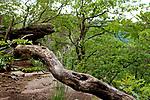 Europa, DEU, Deutschland, Rheinland-Pfalz, Suedliche Weinstraße, Annweiler am Trifels, Trifelsland, Annweiler Felsenland, Typische Landschaft, Wald, Felsen, Natur, Umwelt, Landschaft, Jahreszeiten, Stimmungen, Landschaftsfotografie, Landschaften, Landschaftsphoto, Landschaftsphotographie, <br /> <br /> [Fuer die Nutzung gelten die jeweils gueltigen Allgemeinen Liefer-und Geschaeftsbedingungen. Nutzung nur gegen Verwendungsmeldung und Nachweis. Download der AGB unter http://www.image-box.com oder werden auf Anfrage zugesendet. Freigabe ist vorher erforderlich. Jede Nutzung des Fotos ist honorarpflichtig gemaess derzeit gueltiger MFM Liste - Kontakt, Uwe Schmid-Fotografie, Duisburg, Tel. (+49).2065.677997, ..archiv@image-box.com, www.image-box.com]