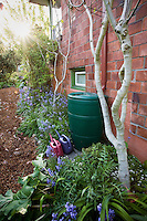 Mulched path through side yard, small space water wise sustainable garden with rain barrel; Jennifer Carlson garden