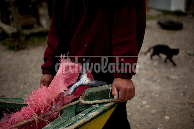 """Photo Essay on the life of the people Lafkenche, a part of the Mapuche indian nation from Southern Chile. Lafkenche mean """"peple from the sea"""", they live from Bio-Bio river towards the southern coast of the country, making a living as fishermen. Their traditions are strong and new groups of them are organizing to preserve their identityBonifacio cove, XIV Region of the Rivers. January 3, 2013.<br /> The poor fishing is a constant between Lafkenches fishermen. The new fisheries law does not recognize them within the quota system reparticion or management areas. In spite of the existence of the OIT Convention 169 on the rights of indigenous peoples."""