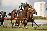 HALLANDALE BEACH, FL - JANUARY 14: #6 Sandiva with Javier Castellano up wins the G3 Marshua's River Stakes at Gulfstream Park. (Photo by Arron Haggart/Eclipse Sportswire/Getty Images