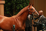 13 September 2011.Hip #297 Distorted Humor - Shining Through colt sold for $250,000.