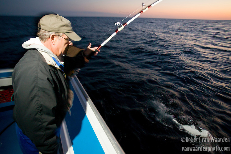 A small shark has taken the bait intended for Blue Fin Tuna. The two fisherman are fishing for tuna on the Gulf of St. Lawrence near North Rustico, PEI, Canada.
