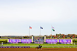November 5, 2020: Gretzky The Great, trained by trainer Mark E. Casse, exercises in preparation for the Breeders' Cup Juvenile Turf at Keeneland Racetrack in Lexington, Kentucky on November 5, 2020. Jon Durr/Eclipse Sportswire/Breeders Cup