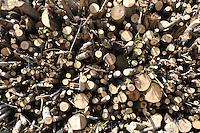 - Abbiategrasso (Mi), impianto per lo sfruttamento di biomasse (legname di scarto) per la produzione di energia elettrica, acqua calda per il teleriscaldamento e pellets (combustibile ecologico);....- Abbiategrasso (Mi) plant for exploitation of biomass (wood waste)  to produce electricity, hot water for district heating and pellets ( ecological fuel )