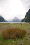 Grass and Mitre Peak, Milford Sound, Fiordland, New Zealand