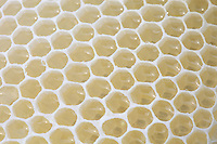 Des cellules pleines de miel de colza.///Cells full of rape flower honey.