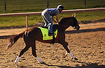 LOUISVILLE, KY - APRIL 20: Fellowship (Awesome of Course x Go Girlfriend Go, by Demidoff) gallops with exercise rider Brian O'Leary at Churchill Downs, Louisville KY. Owner Jacks or Better Farm Inc., trainer Mark Casse.(Photo by Mary M. Meek/Eclipse Sportswire/Getty Images)