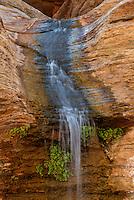 Waterfall and Venus maidenhair ferns<br /> Olo Canyon, Grand Canyon<br /> Grand Canyon National Park<br /> Colorado Plateau, Arizona