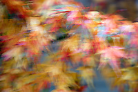 Autumn leaves abstract.