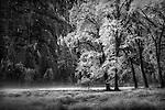 Yosemite, Fall Trees, Gary Wagner Photography,