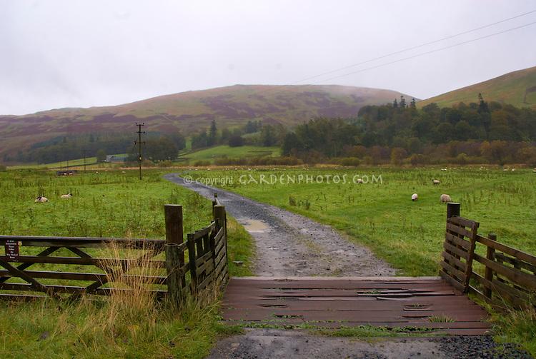 Scotland near Innerleithen, sheep meadow fields and bridge, farm animals, hills, autumn