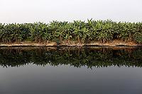 Trees line the banks of a polluted river on the outskirts of Kolkata.<br /> <br /> To license this image, please contact the National Geographic Creative Collection:<br /> <br /> Image ID: 1925839 <br />  <br /> Email: natgeocreative@ngs.org<br /> <br /> Telephone: 202 857 7537 / Toll Free 800 434 2244<br /> <br /> National Geographic Creative<br /> 1145 17th St NW, Washington DC 20036