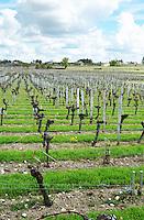 chateau cadet bon vineyard saint emilion bordeaux france
