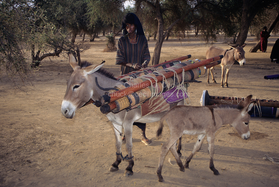 Akadaney, Central Niger, West Africa.  Fulani Nomads.  Woman Loading Portable Bed Pieces on Donkey.