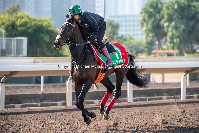 SHA TIN, HONG KONG – December 4:Prince Of Arran at trackwork on December 4 at Sha Tin Race Course in Hong Kong before starting in the Longines Hong Kong Vase. Michael McInally/Eclipse Sportswire/CSM