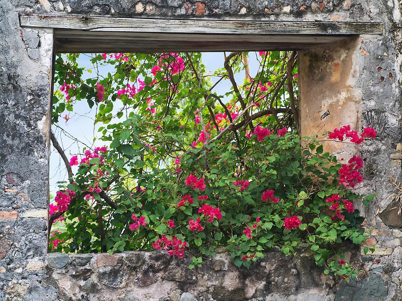 Stone window with bouganvilla flowers. St. John, Virgin Islands.