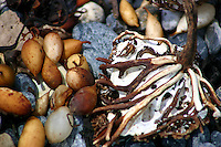 Kelp on the Tollgate Islands