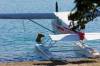 Brown bear fishes for salmon in Naknek lake, near a float plane, Katmai National Park, southwest, Alaska.