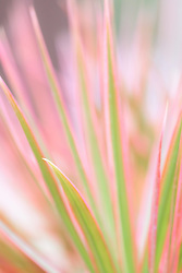 Soft pastel colors and lines of Hawaiian flora.
