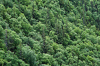 Aerial view of a forest woodland, Alaska, USA