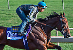 October 26, 2014:  American Pharoah, trained by Bob Baffert, exercises in preparation for the Sentient Jet Breeders' Cup Juvenile at Santa Anita Race Course in Arcadia, California on October 26, 2014. Scott Serio/ESW/CSM