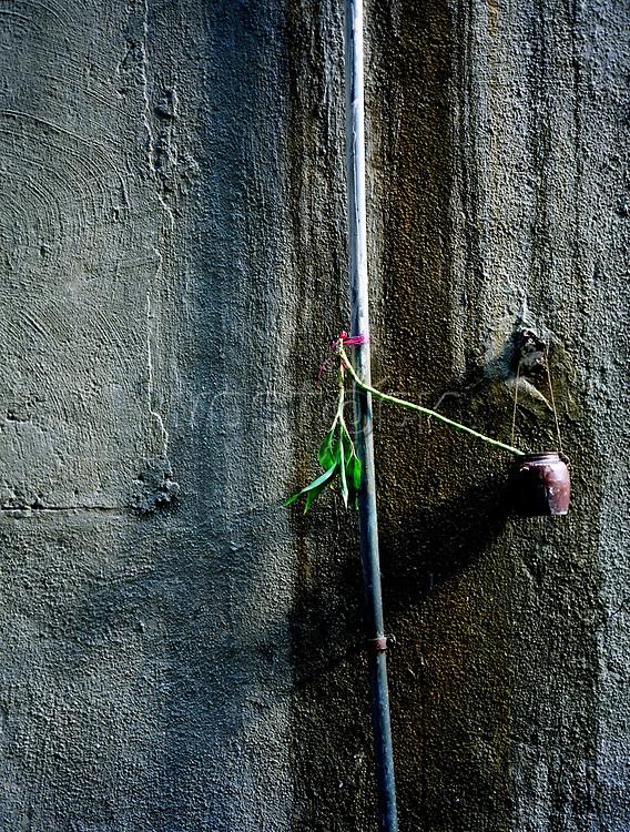 Flora, Pflanze, Wand, trist, Hongkong, China, 2003, Hong Kong Flora<br />  ***Keine Social_Media Nutzung***<br /> <br /> Engl.: Asia, China, Hong Kong, urban flora, plant, wall, house<br /> ***No social media use***
