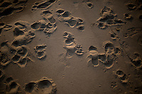 Footprints are seen in the sand on Saturday, May 21, 2016, in Lakeside, Michigan. (Photo by James Brosher)