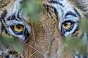 India: Mammals