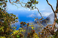 Na Pali mountain coast and the Pacific Ocean, through the clouds and the tropical vegetation, from the Pihea Trail on Kauai Island, Hawaii