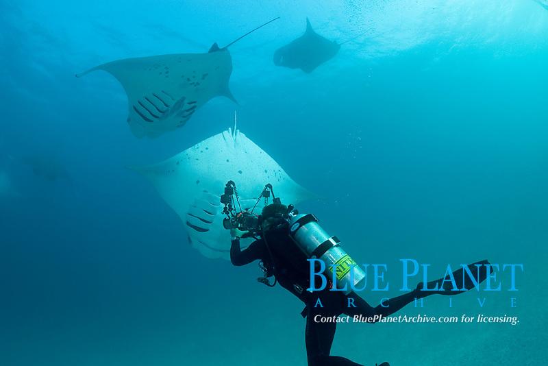 scuba diver photographing reef manta ray, Mobula alfredi, barrel roll feeding on plankton, Hanifaru Bay, Baa Atoll, Maldives, Indian Ocean