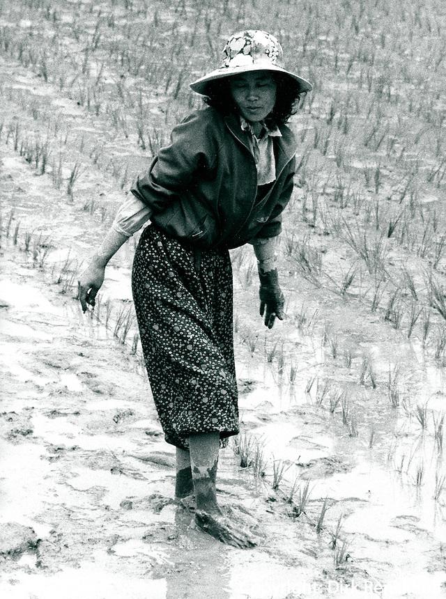 Reisanbau in Hapchon, Korea 1986