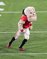 ATHENS, GA - SEPTEMBER 21: Hairy Dawg during a game between Notre Dame Fighting Irish and University of Georgia Bulldogs at Sanford Stadium on September 21, 2019 in Athens, Georgia.