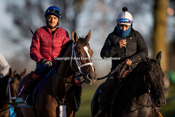 November 3, 2020: Arklow, trained by trainer Brad Cox, exercises in preparation for the Breeders' Cup Turf at  Keeneland Racetrack in Lexington, Kentucky on November 3, 2020. Alex Evers/Eclipse Sportswire/Breeders Cup