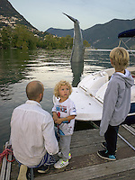Switzerland. Canton Ticino. Lugano. The installation Save the Whale consists in a whale tail visible from the lakefront throughout the LongLake Festival, from 2 July to 2 August 2014. Proposed by the duo Stefano Ferretti and Alex Dorici, the project foresees the realization of the rear of a whale while it's plunging. They propose an almost monumental and impressive installation both for its great size and surrealist hallmark. A father and his two sons. 16.07.14 © 2014 Didier Ruef