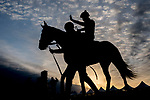 May 12, 2021: Keepmeinmind returns from the track at sunrise as Preakness Stakes hopefuls train at Pimlico Race Course in Baltimore, Maryland. Scott Serio//Eclipse Sportswire/CSM