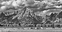 Horses graze before the Grand Tetons.<br /> <br /> This image is also available in color.