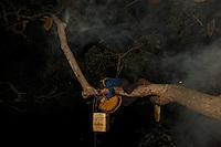 The moonless nights of December to March: Hamsah and his brother Boni are agile climbers. Taught when they were young by their father, they are known in the community for their dexterity and courage.  ///Les nuits sans lune de Décembre à Mars, Hamsah et son frère Boni sont d'habiles grimpeurs. Initiés lorsqu'ils étaient enfants par leur père, ils sont connus dans leur communauté pour leur dextérité et leur courage.