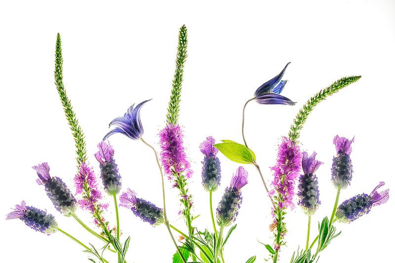 Flower Boquet. Oregon
