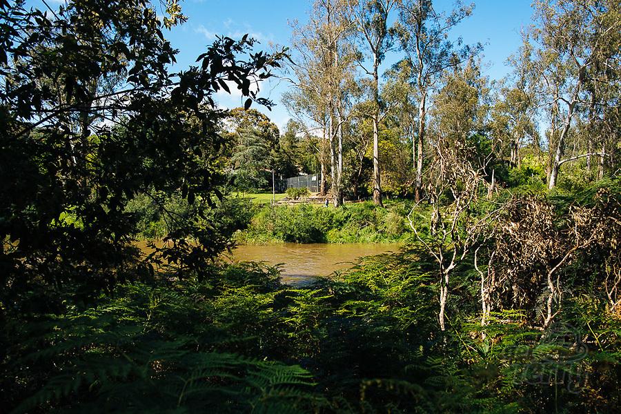 Image Ref: YV497<br /> Location: Normans Reserve, Warrandyte<br /> Date of Shot: 17.10.20