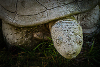 A turtle sculpture, ensconced in the grass outside the Spinnaker Yacht Club at the San Leandro Marina on San Francisco Bay.