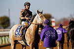 November 7, 2020 : Silver Dust, ridden by W. Bret Calhoun, walks back after the Big Ass Fans Dirt Mile on Breeders' Cup Championship Saturday at Keeneland Race Course in Lexington, Kentucky on November 7, 2020. Carolyn Simancik/Breeders' Cup/Eclipse Sportswire/CSM