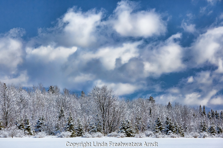 Winter sky and snow-covered trees