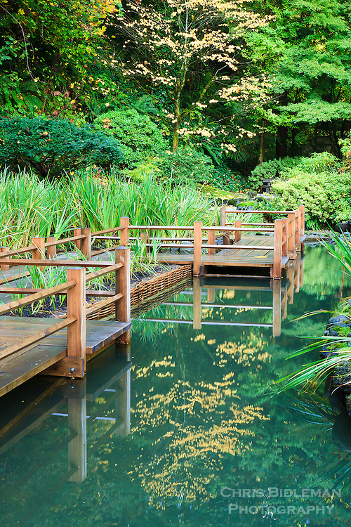 Zig Zag bridge (yatsuhashi) in strolling pond garden of Portland Japanese Garden has reflection in water and yellow leaves  in tree during Fall