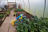 15 year old excluded from mainstream school working in a polytunnel while on placement at a college run by Barnsley Community Build, a social enterprise, South Yorkshire.