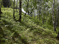 FOREST_LOCATION_90021