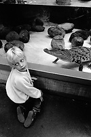 Switzerland. Zürich. A young boy kneels in front of the crocodile's aquarium at the zoo. A crocodile is any species belonging to the family Crocodylidae (sometimes classified instead as the subfamily Crocodylinae). The term can also be used more loosely to include all extant members of the order Crocodilia: i.e. the true crocodiles, the alligators and caimans (family Alligatoridae) and the gharials (family Gavialidae), as well as the Crocodylomorpha which includes prehistoric crocodile relatives and ancestors.20.07.1993 © 1993 Didier Ruef