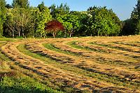 Wheat drying in rural Washington County Oregon