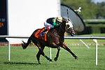 ARLINGTON HEIGHTS,IL-AUGUST 12: postulation,ridden by Jorge Vargas, Jr,wins the American St.Leger at Arlington International Race Track on August 12,2016 in Arlington Heights,Illinois (Photo by Kaz Ishida/Eclipse Sportswire/Getty Images)