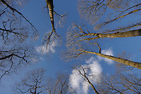 Woodland at Skelwith Fold, Cumbria.